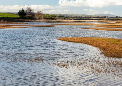 Castle Espie Wetlands, County Down, Northern Ireland