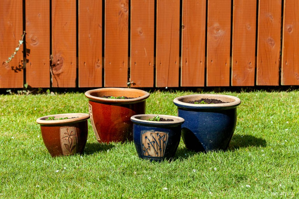 Plant pots on grass. Garden in the Spring