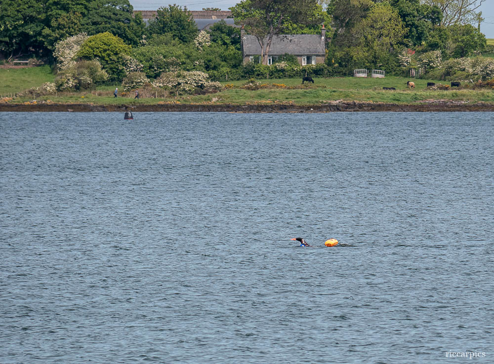Swimmer, Ballyholme, Bangor